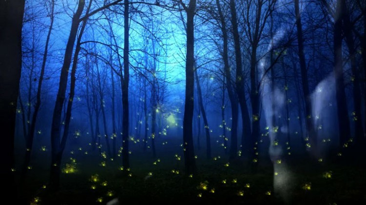 Fireflies-poster-large